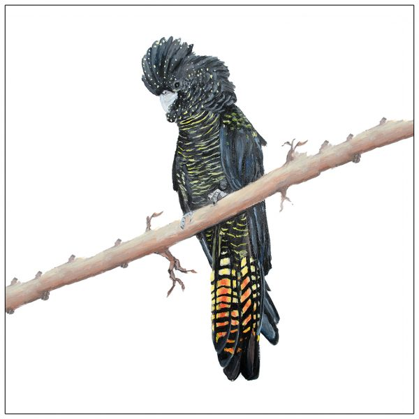 coaster-art-black-cockatoo-on-long-branch