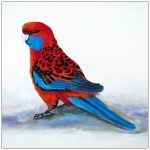 coaster-art-crimson-rosella-on-ground