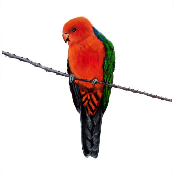 coaster-art-king-parrot-on-branch