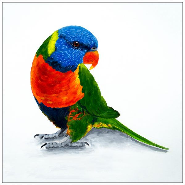 coaster-art-lorikeet-on-ground