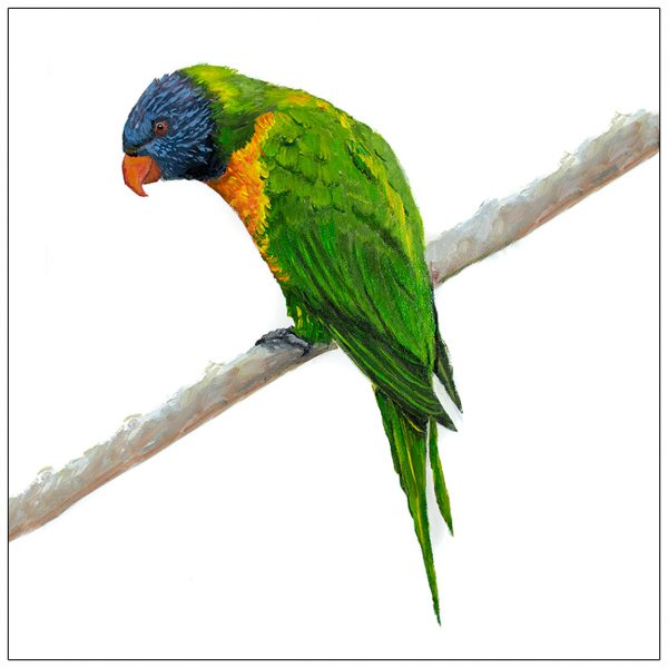 coaster-art-lorikeet-on-long-branch