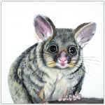 coaster-art-possum-white-background