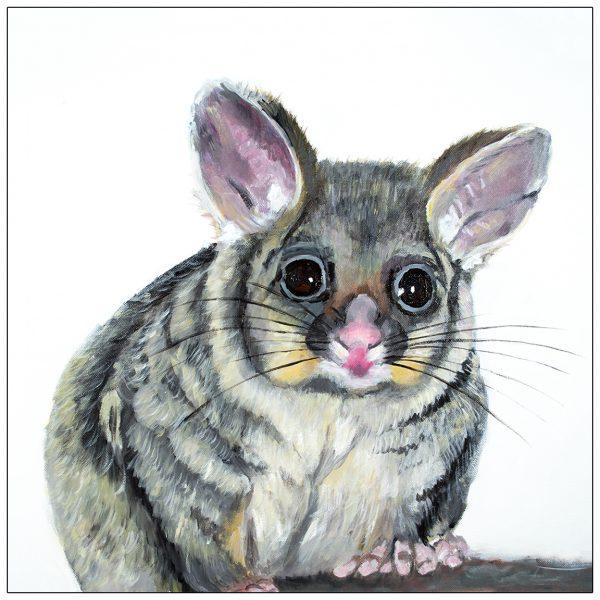 coaster-art-possum-white-background