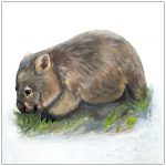 coaster-art-wombat