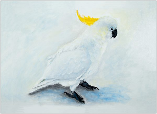placemat-cockatoo-on-ground