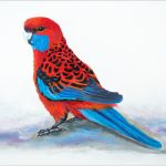 placemat-crimson-rosella-on-ground