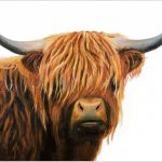 placemat-highland-bull-portrait