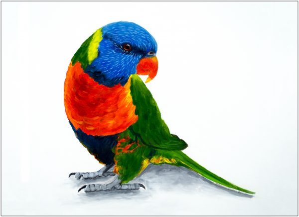 placemat-lorikeet-on-ground