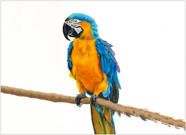 placemat-macaw-on-long-branch