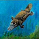 placemat-platypus