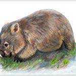 placemat-wombat