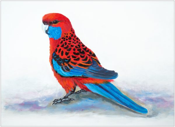 print-crimson-rosella-on-ground