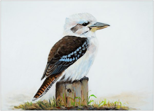 print-kookaburra-on-stump