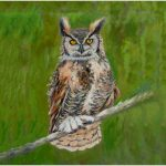 print-owl-green-background