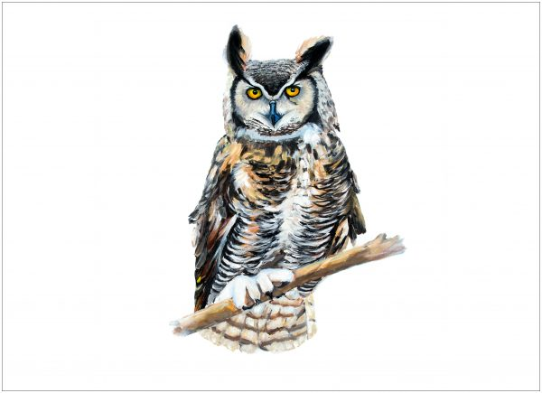 print-owl-white-background