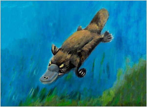 print-platypus