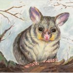 print-possum-grey-background