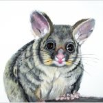 print-possum-white-background
