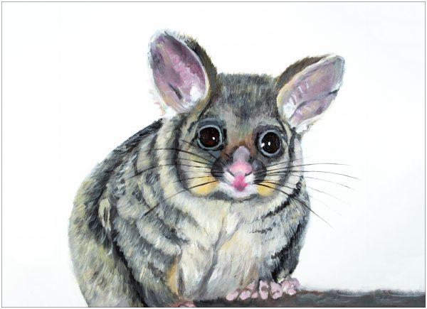 print-possum-white-background